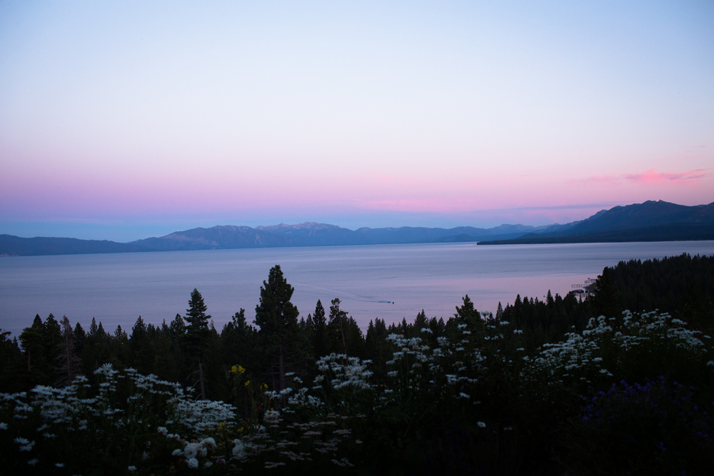lake tahoe and daisies at sunset