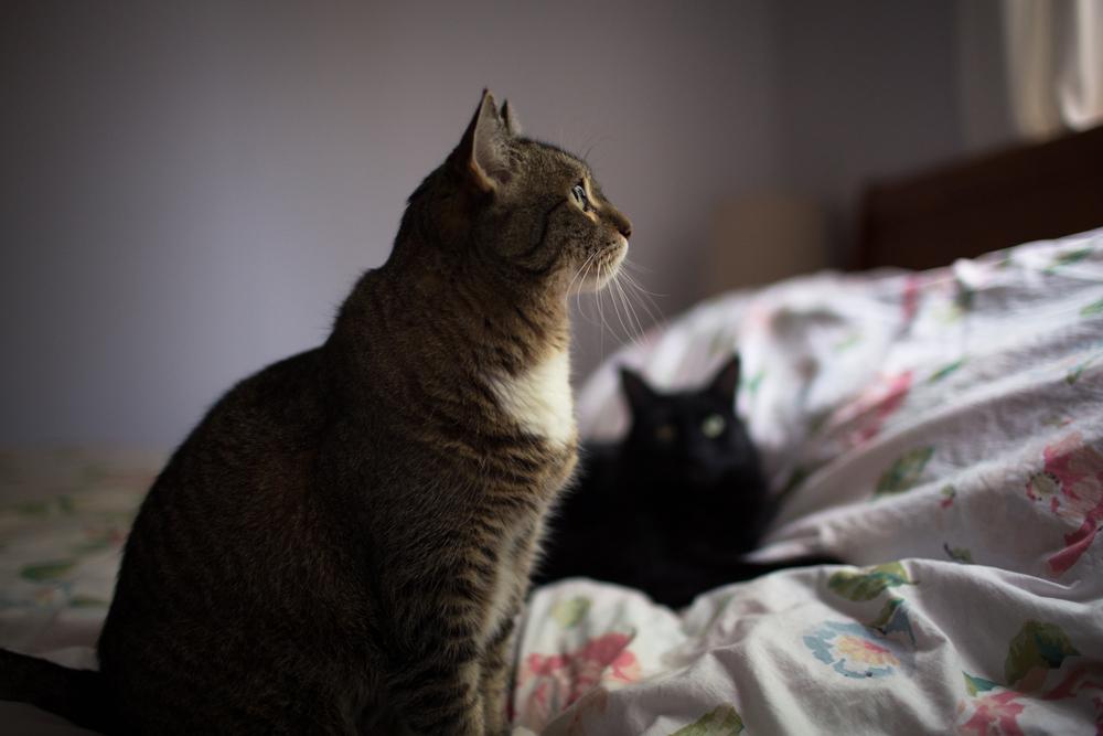 kitties