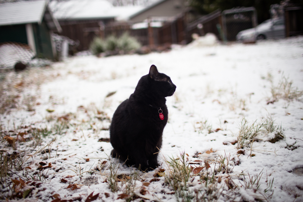 little kitty's first snow