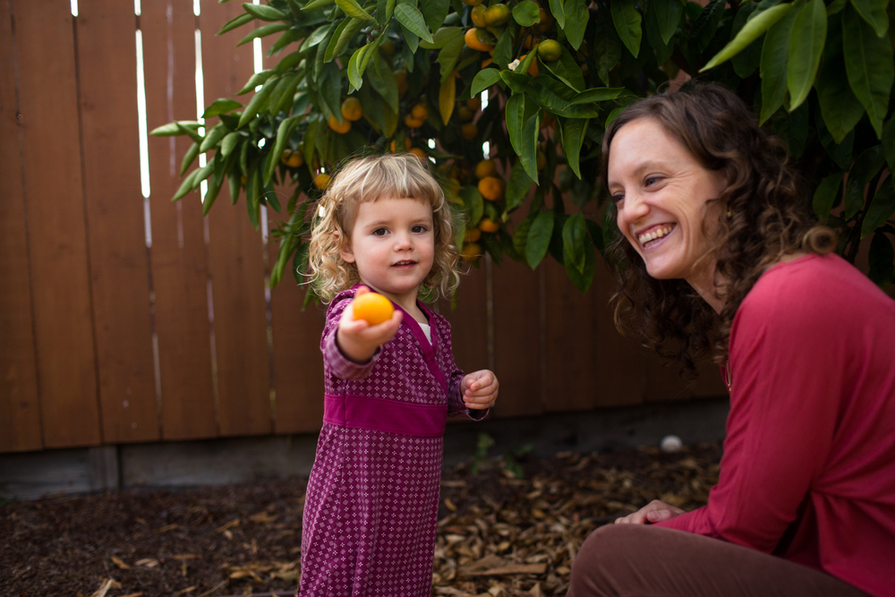 picking mandarin oranges with mom grass valley family portrait photographer