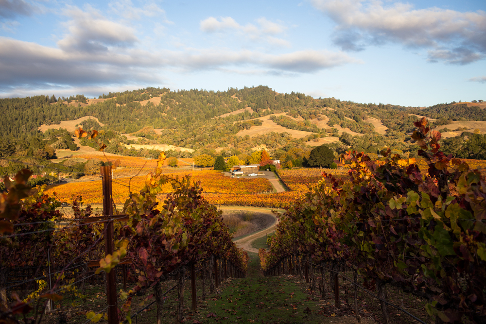 goldeneye vineyard winery anderson valley mendocino county philo