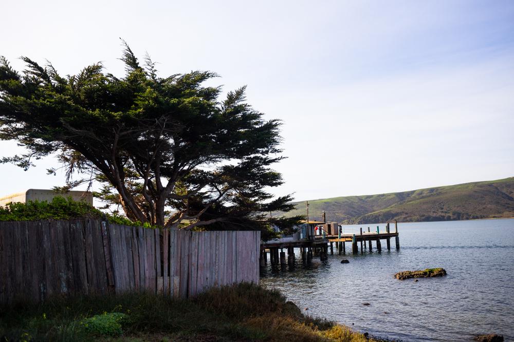 tomales bay marshall california