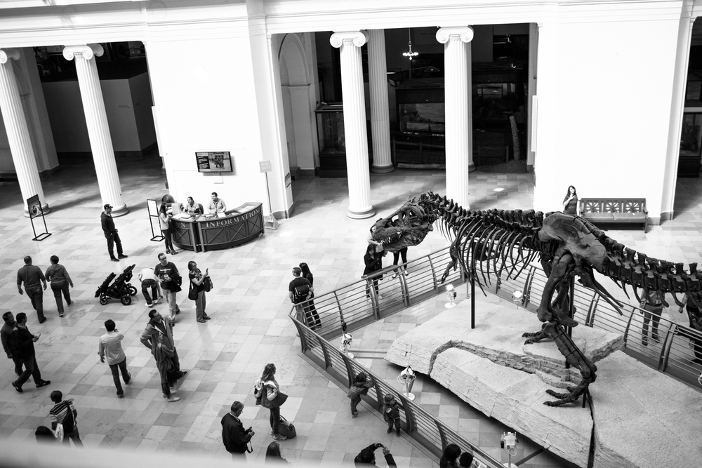 dinosaurs at the field museum chicago