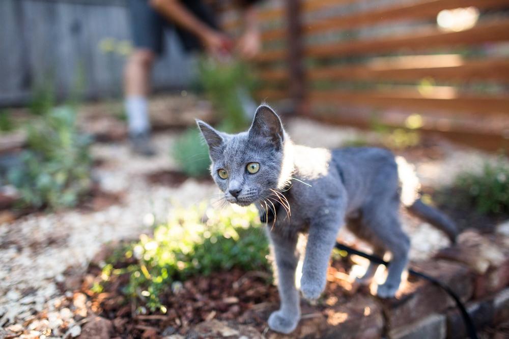nevada city lifestyles photographer documentary natural light kitten in a garden