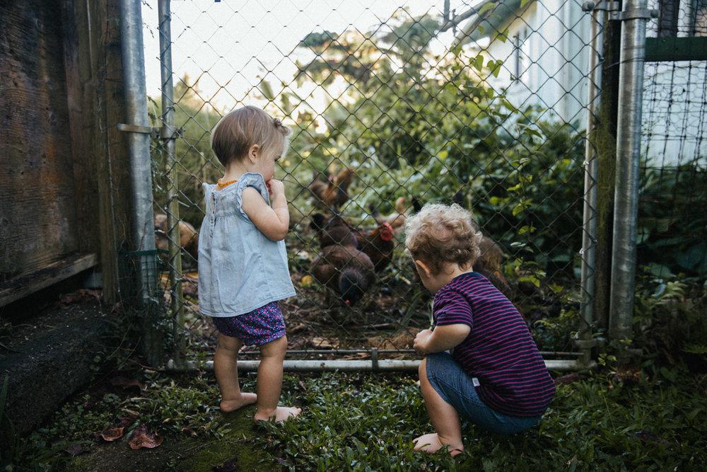 hilo-family-photographer-1.jpg