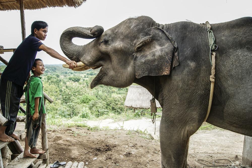 elephant&man.JPG