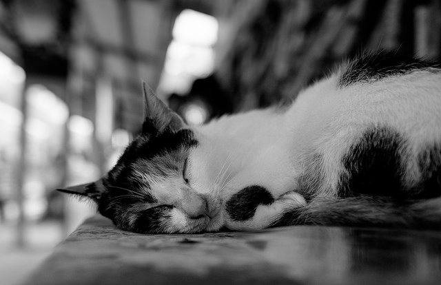 I was able to creep up on this sleeping cat without even waking him up