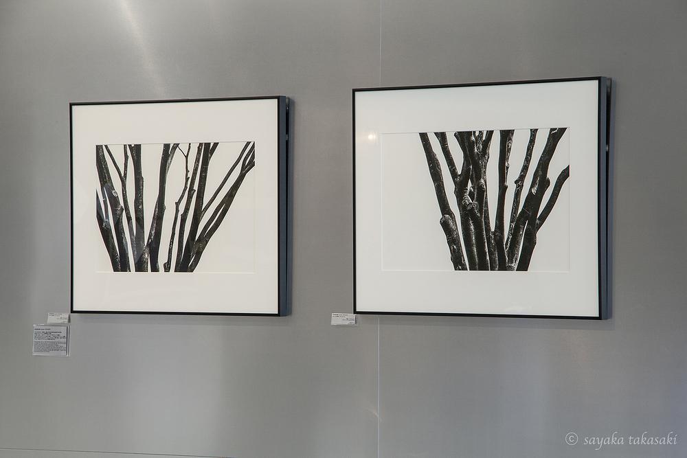 左から 木々の肖像Ⅱ #2,#1