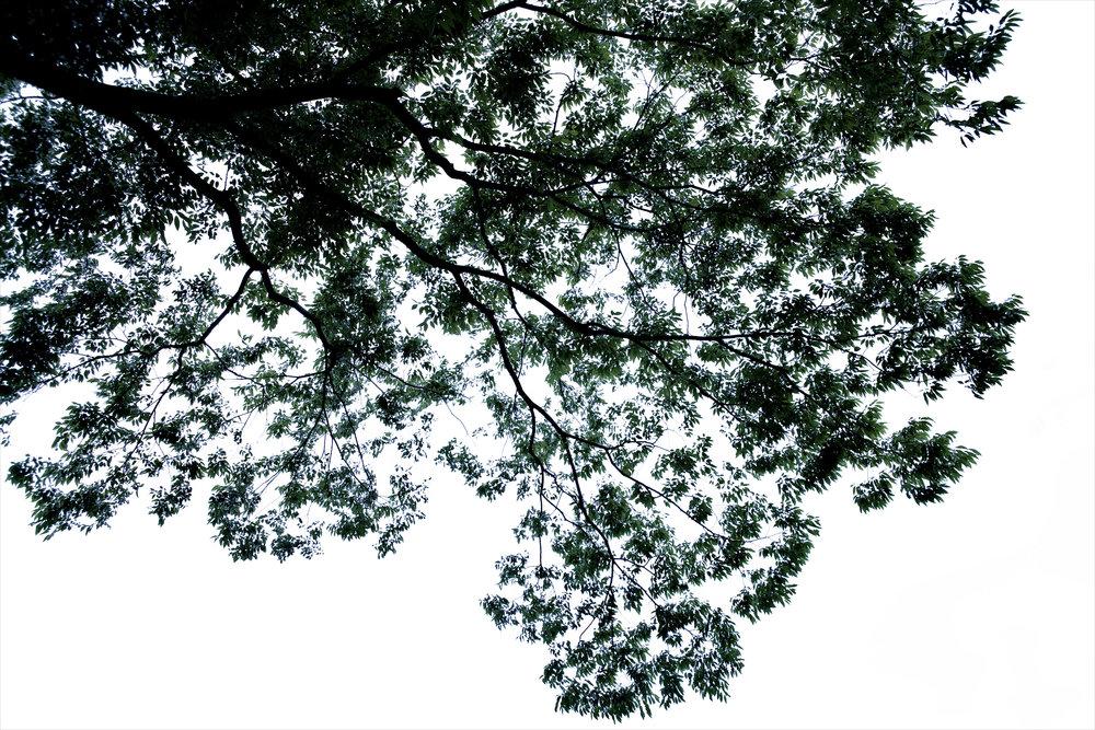 木々の肖像(2012)