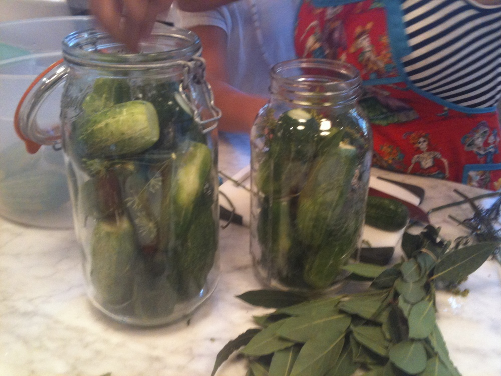 Stuffing Cucumbers for Pickles.JPG