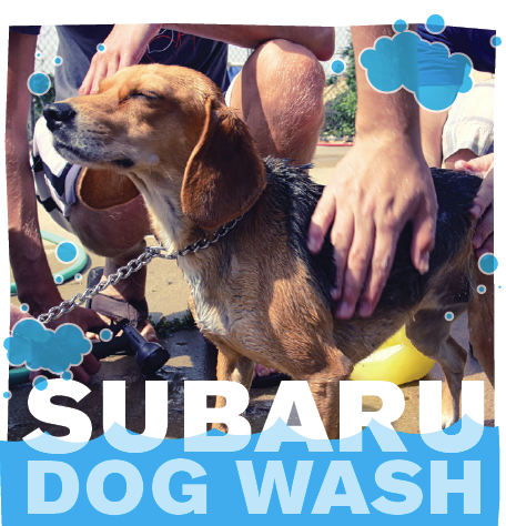 Subaru dog wash care does your dog need a bath dont want to do it yourself solutioingenieria Gallery