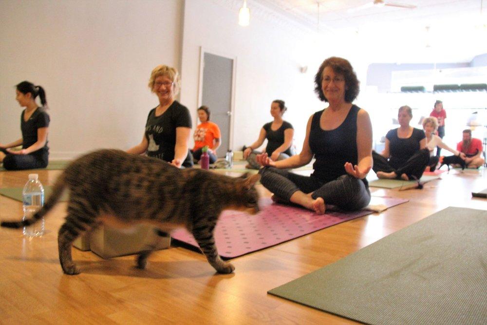 October 2016 Yoga11.jpg