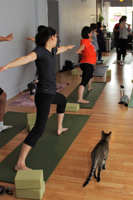 October 2016 Yoga16.jpg