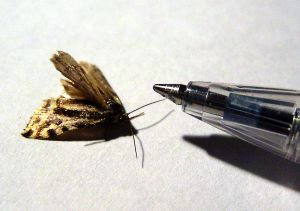 154265_moth_meets_pen.jpg