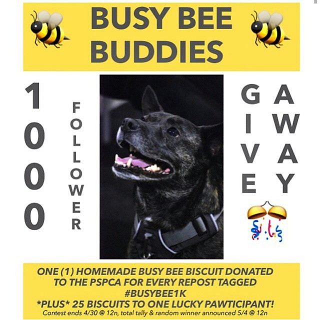Congrats to our friends @busybeebuddies for reaching 1,000 followers! To celebrate, they're donating one homemade biscuit to the @PSPCA for every repost of this image with the tag #busybee1k 🐝 💕 🐕
