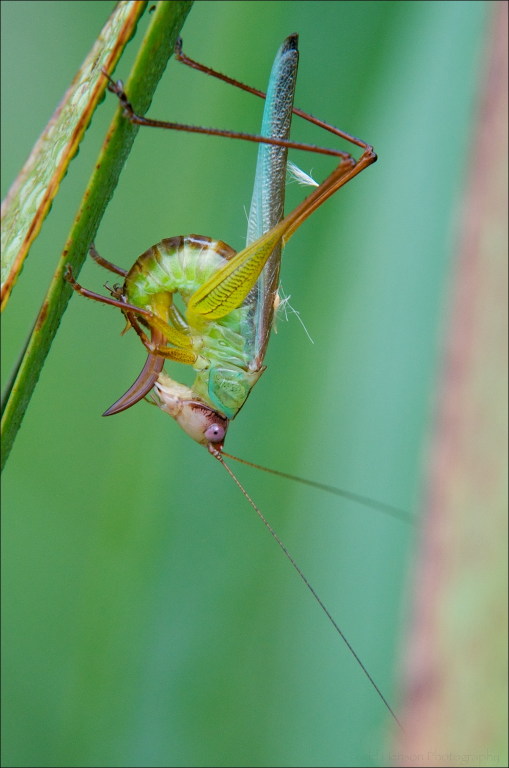 Katydid Cleaning