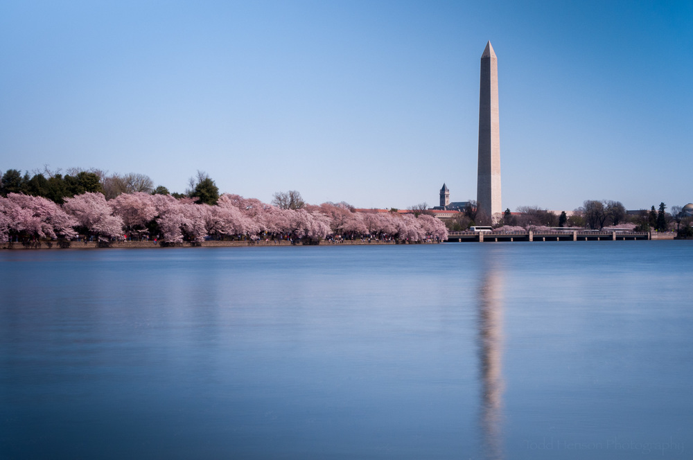 Washington Monument & Cherry Blossoms Reflected in the Tidal Basin