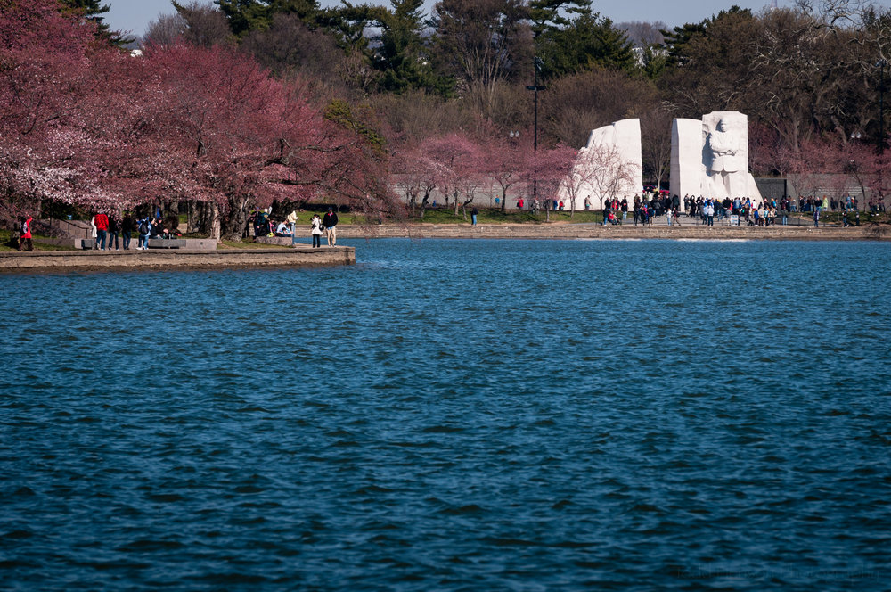 Cherry blossoms, crowds and Martin Luther King, Jr. Memorial across tidal basin