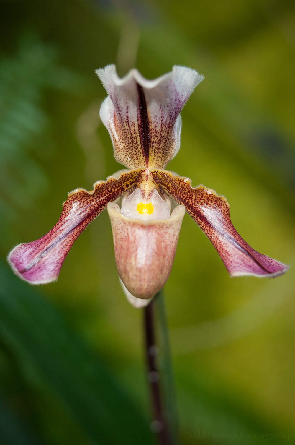 Delicately shaped orchid