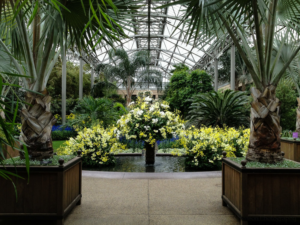 1: Entry display of orchids at Longwood Gardens