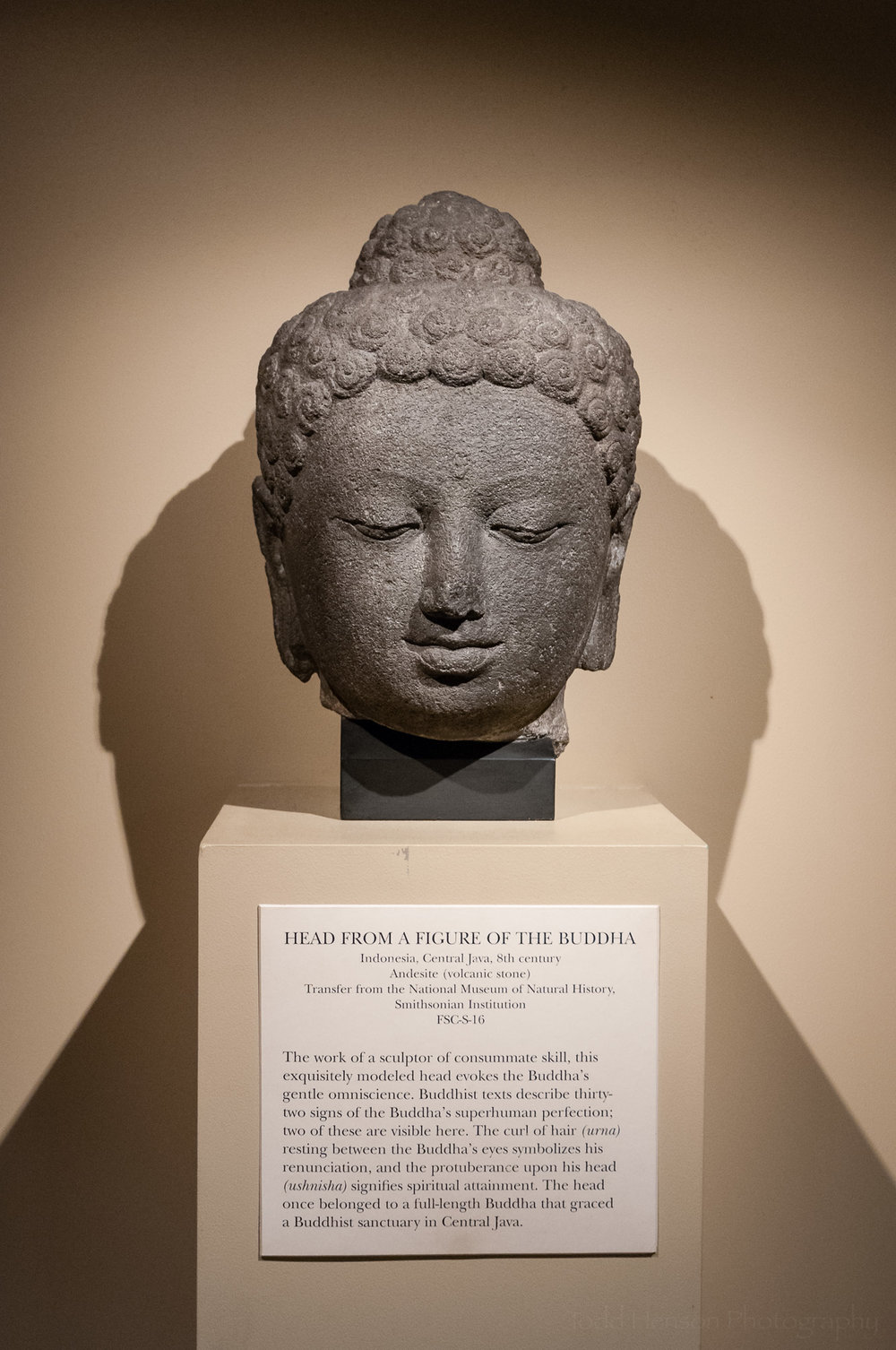 Head From a Figure of the Buddha at the Sackler Museum