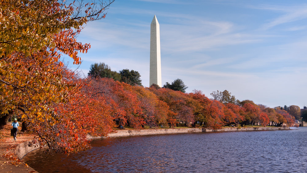 Cherry trees along the Tidal Basin during autumn, with the Washington Monument in the background. Washington, D.C.