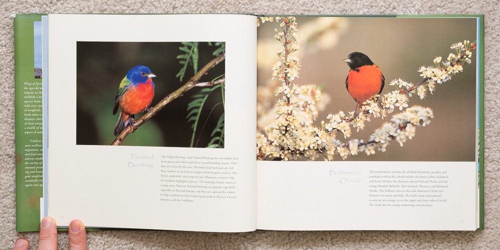 Wings of Spring   (pages 16 - 17). Painted Bunting and Baltimore Oriole.