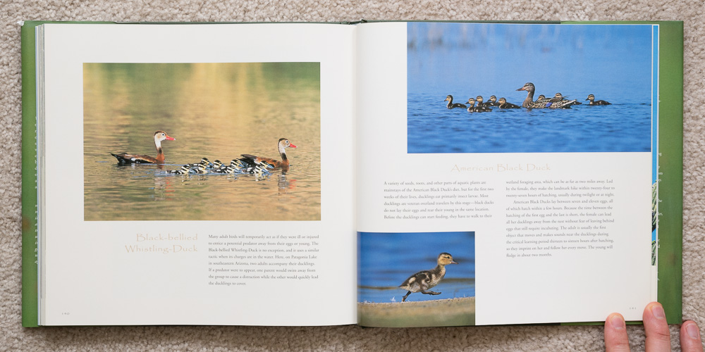 Wings of Spring   (pages 140 - 141). Black-bellied Whistling-Duck and American Black Duck.