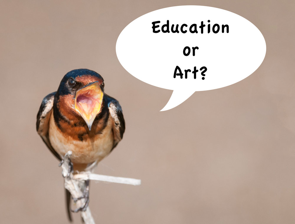 "Barn Swallow Singing ""Education or Art?"""