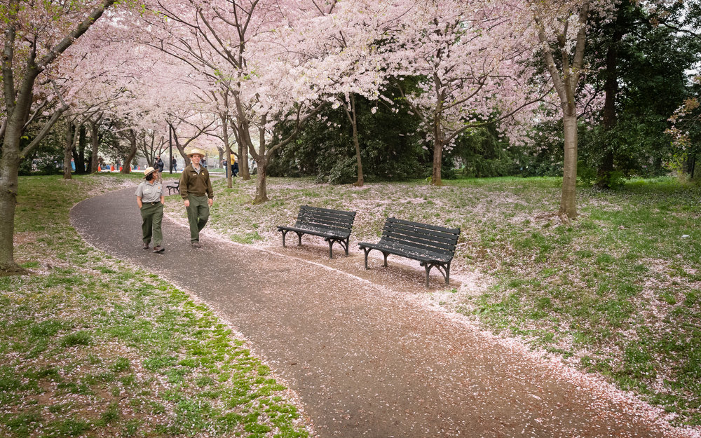 Cherry Blossom Trail - A path leading from the FDR Memorial towards the Tidal Basin.