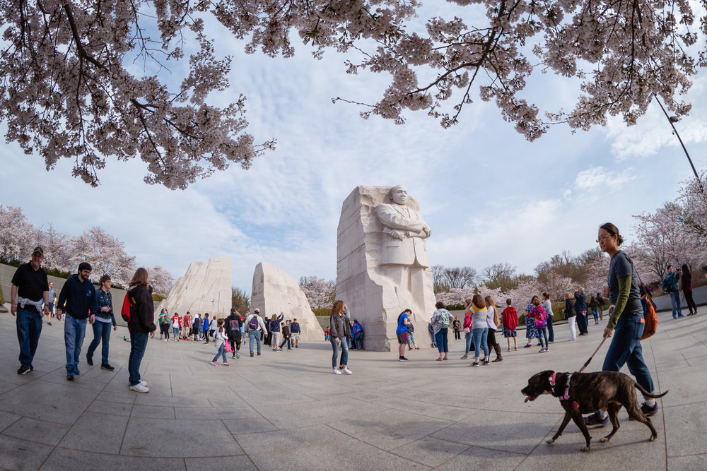 Martin Luther King, Jr Memorial Cherry Blossom Crowds