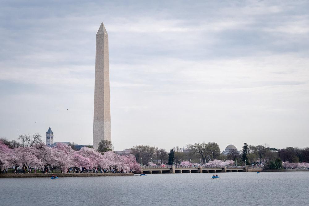 Washington Monument Cherry Blossom Crowds