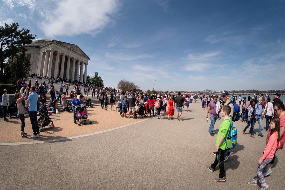 Jefferson Memorial Cherry Blossom Crowds
