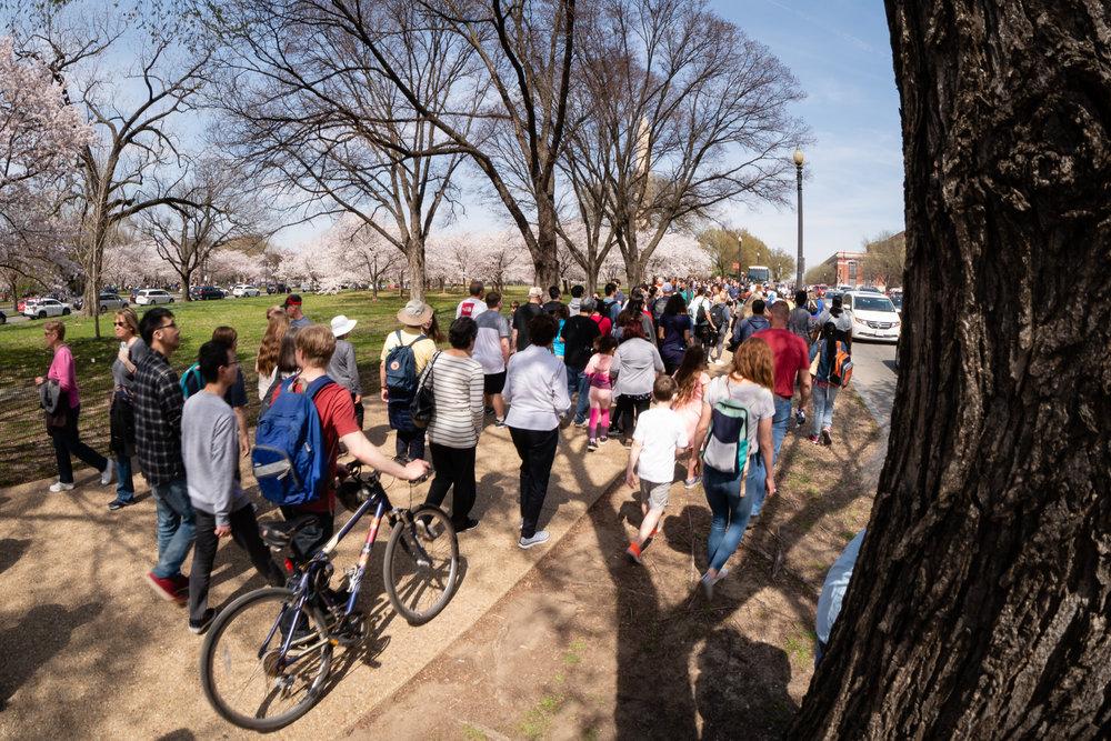 Cherry Blossom crowds while leaving Washington, DC