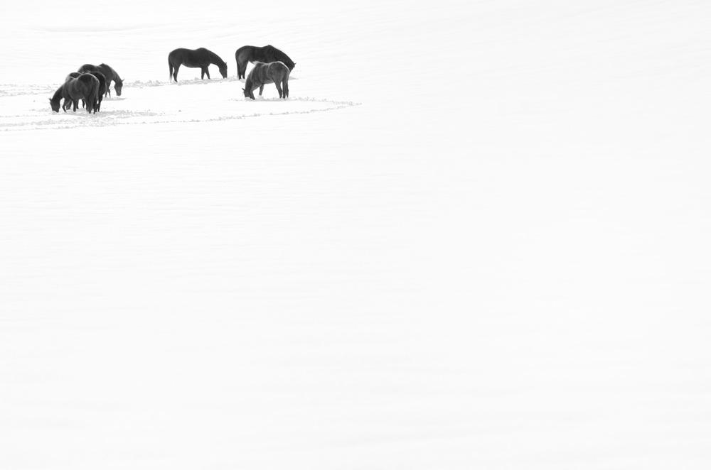 snowhorses.jpg