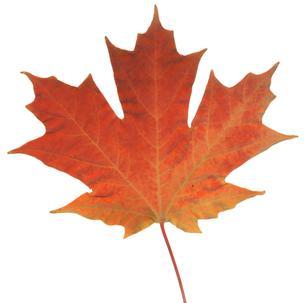 leaf_generic_NSH-304.jpg