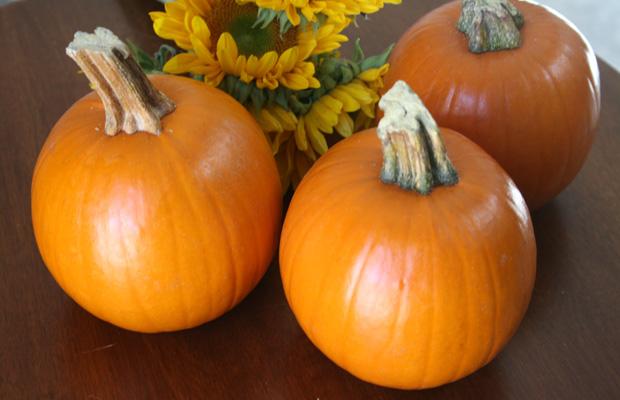 pumpkin62.jpg