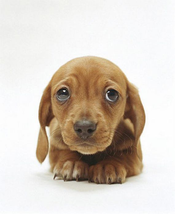 cute_puppy_eyes-1680x1050.jpg