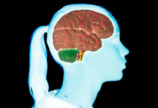 teen_brain_1.jpg