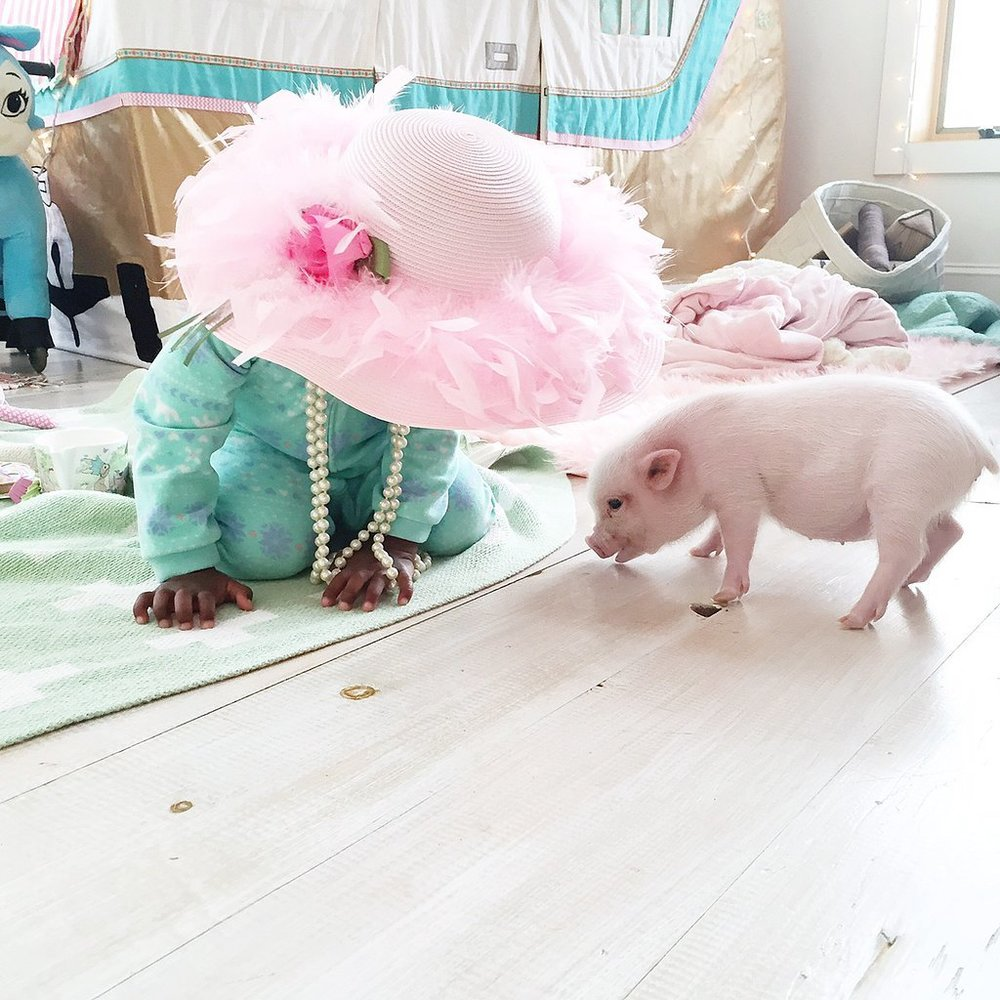 Adorable-Pictures-Toddler-Her-Pet-Pig (5).jpg
