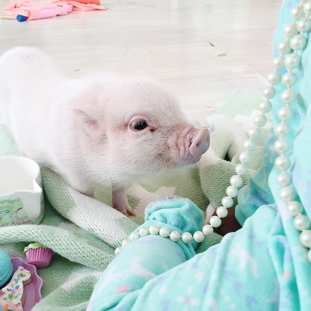 Adorable-Pictures-Toddler-Her-Pet-Pig (3).jpg