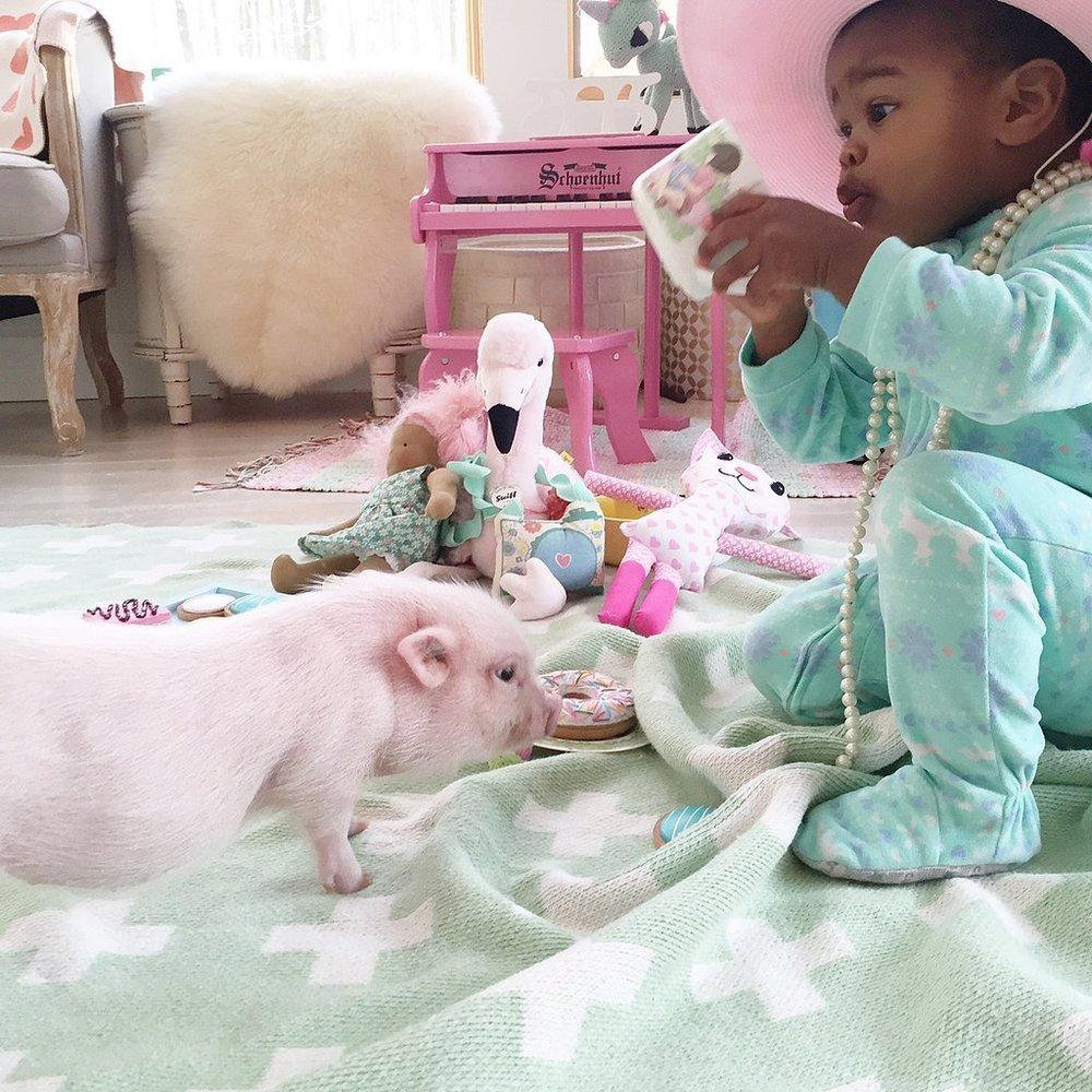 Adorable-Pictures-Toddler-Her-Pet-Pig (4).jpg