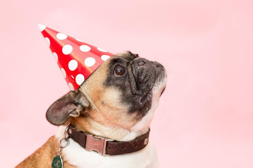 doggie birthday.jpeg