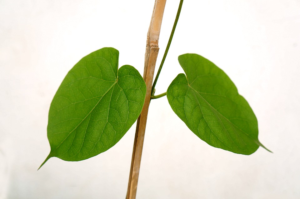 green-leaf-2922691_960_720.jpg