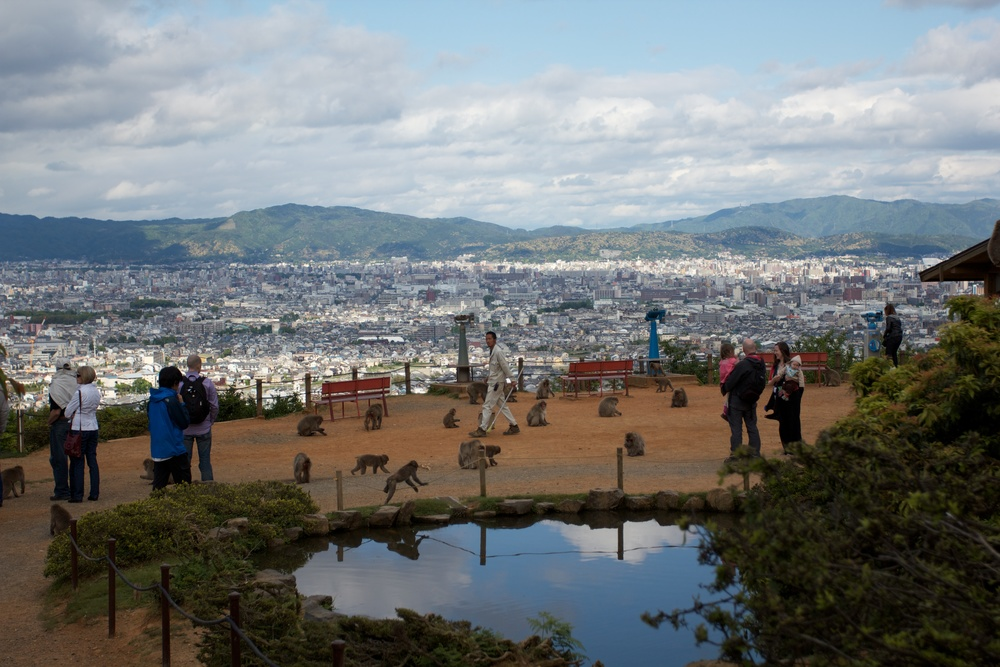 Iwatayama Monkey Park, Kyoto (1).jpg