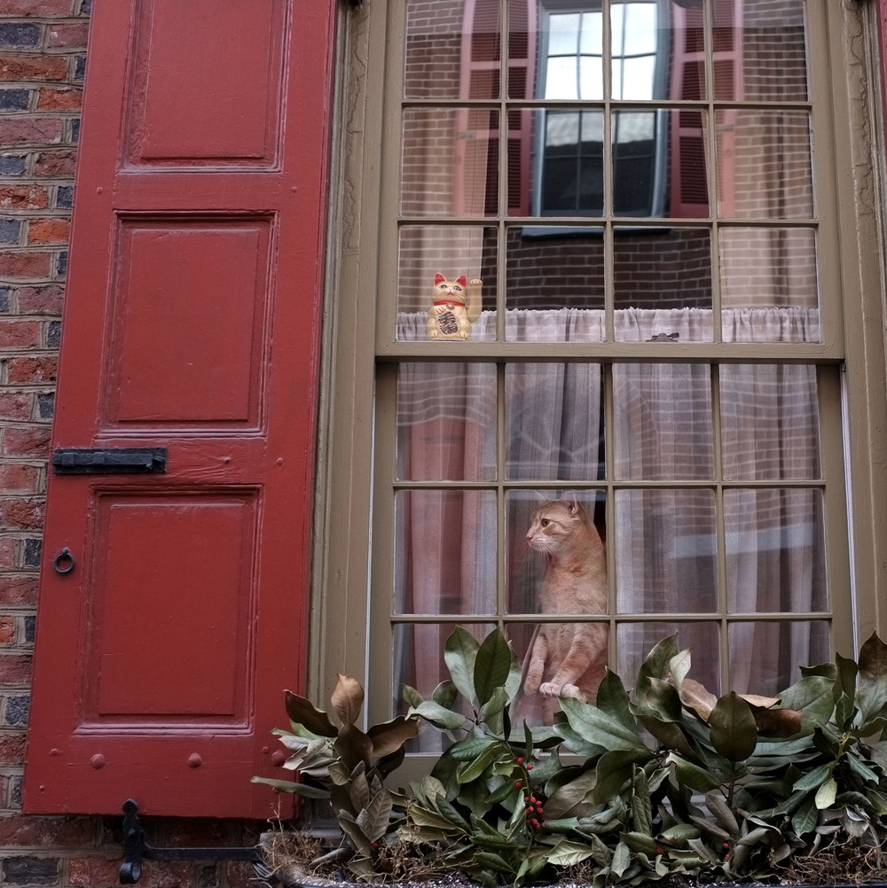 Elfreth's Alley Cat