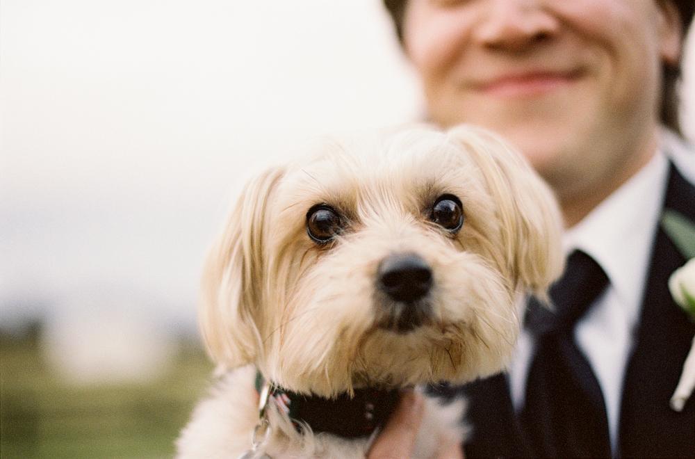 Puppy love…