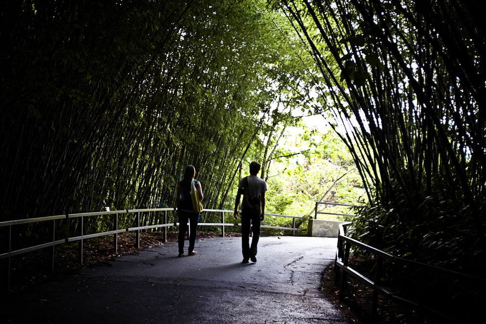 bamboo walkway in the north carolina zoo