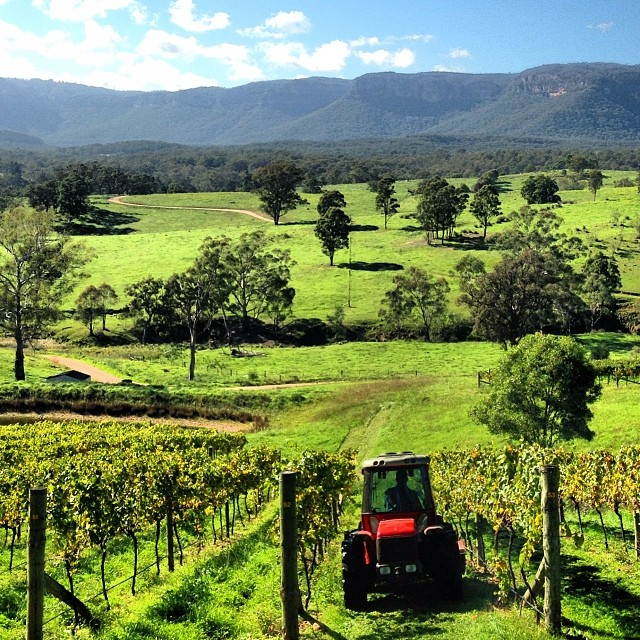 I don't think my husband is coming home with me. Tractors, pig hunting, wine from these vines and chocolate. Living his dream life and it doesn't involve me! #dryridgeestate #megalongvalley #coolclimatewine #myhusbandwontcomehome