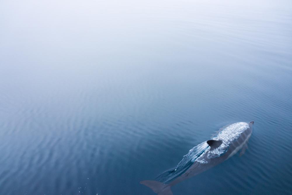 DolphinAdventure.Aug.13_87.jpg